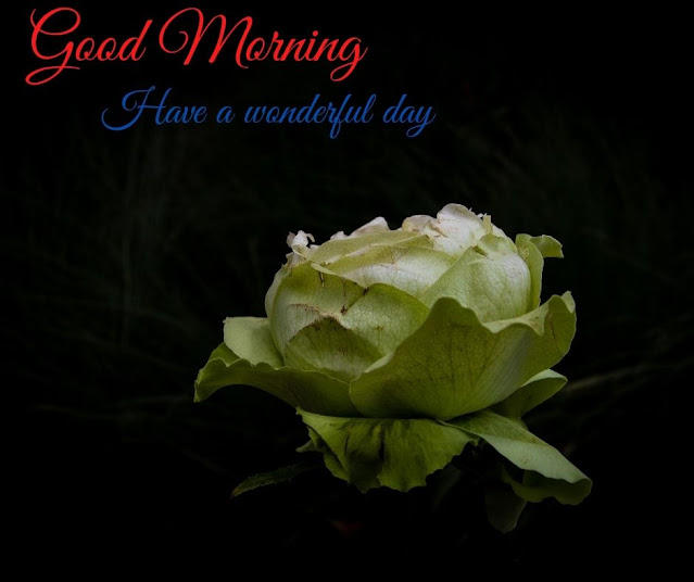 flowers images good morning