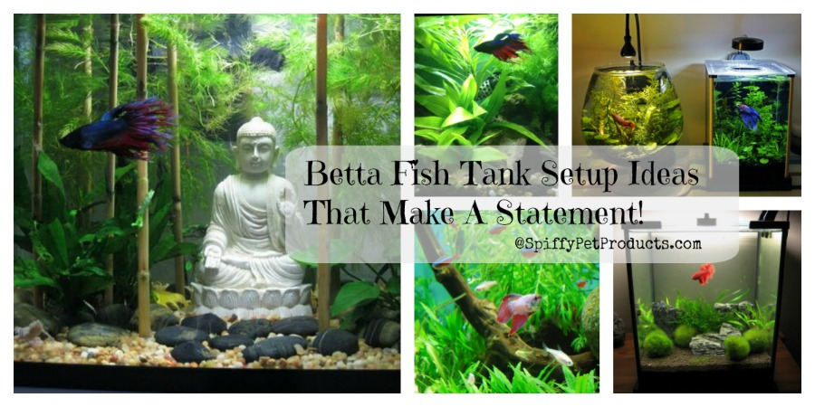 Betta Fish Tank Setup Ideas For Your Pet Fish That Make A Statement And Adds To Your Home Decor!