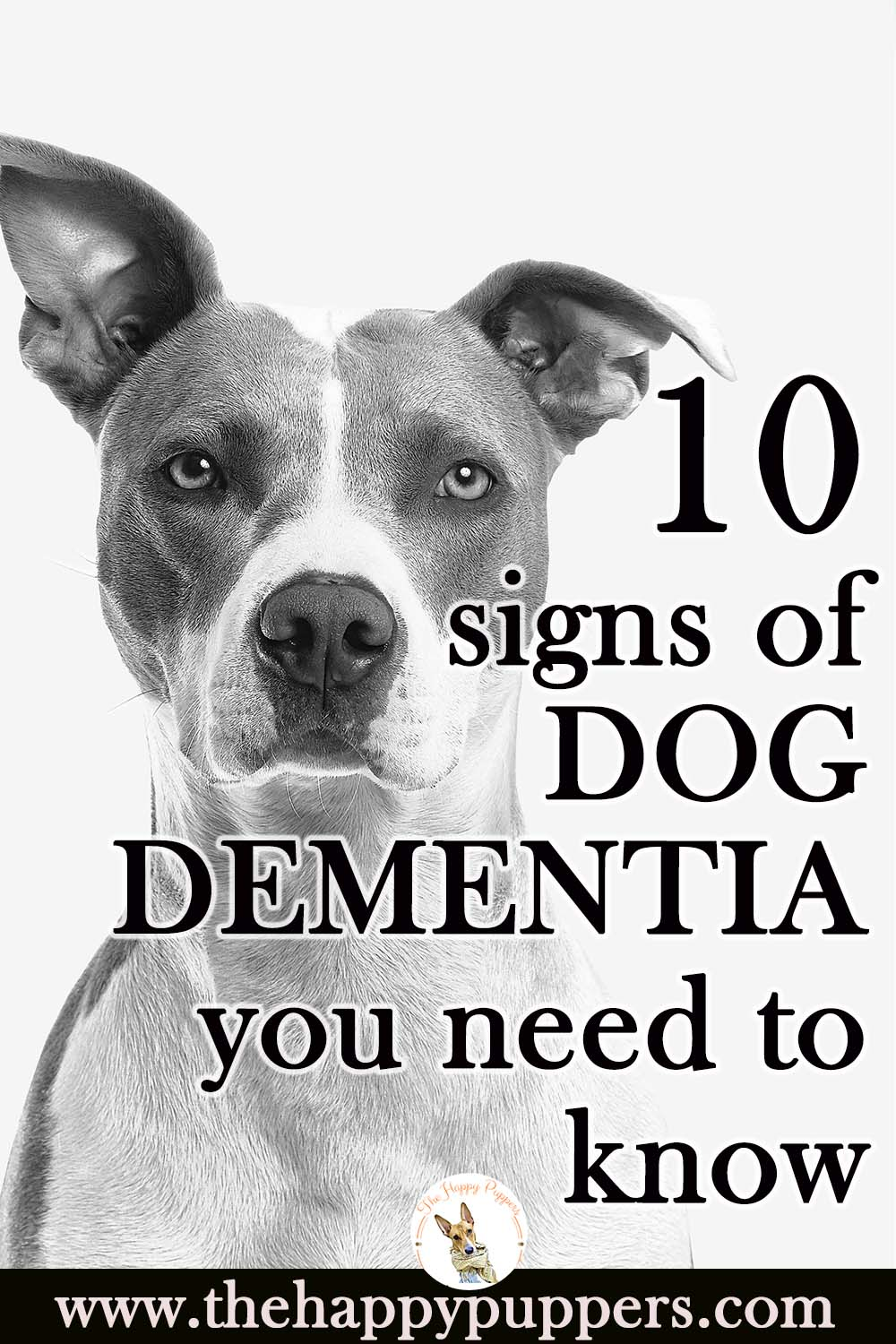 What is dog dementia