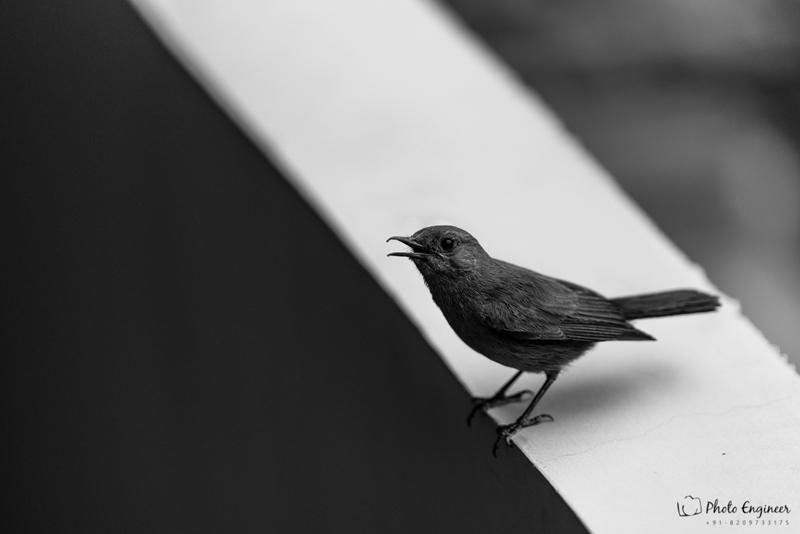 """Bird or Birds"" - Photography Contest Entry by Atul Gupta"
