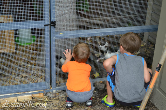 DIY Duck or Chicken Run