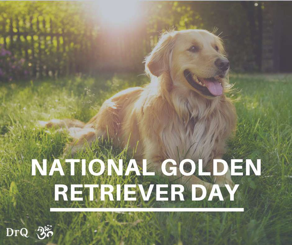 National Golden Retriever Day Wishes Images download
