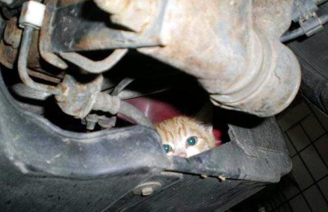 Πυροσβέστες στο Ναύπλιο απεγκλώβισαν γατάκι που είχε σφηνώσει σε ψυγείο καταστήματος
