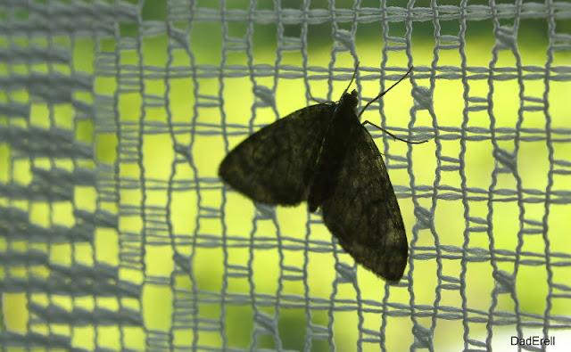 Papillon sur un rideau