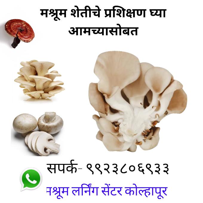 Mushroom Farming Training Center In Maharashtra   Mushroom Learning Center Kolhapur