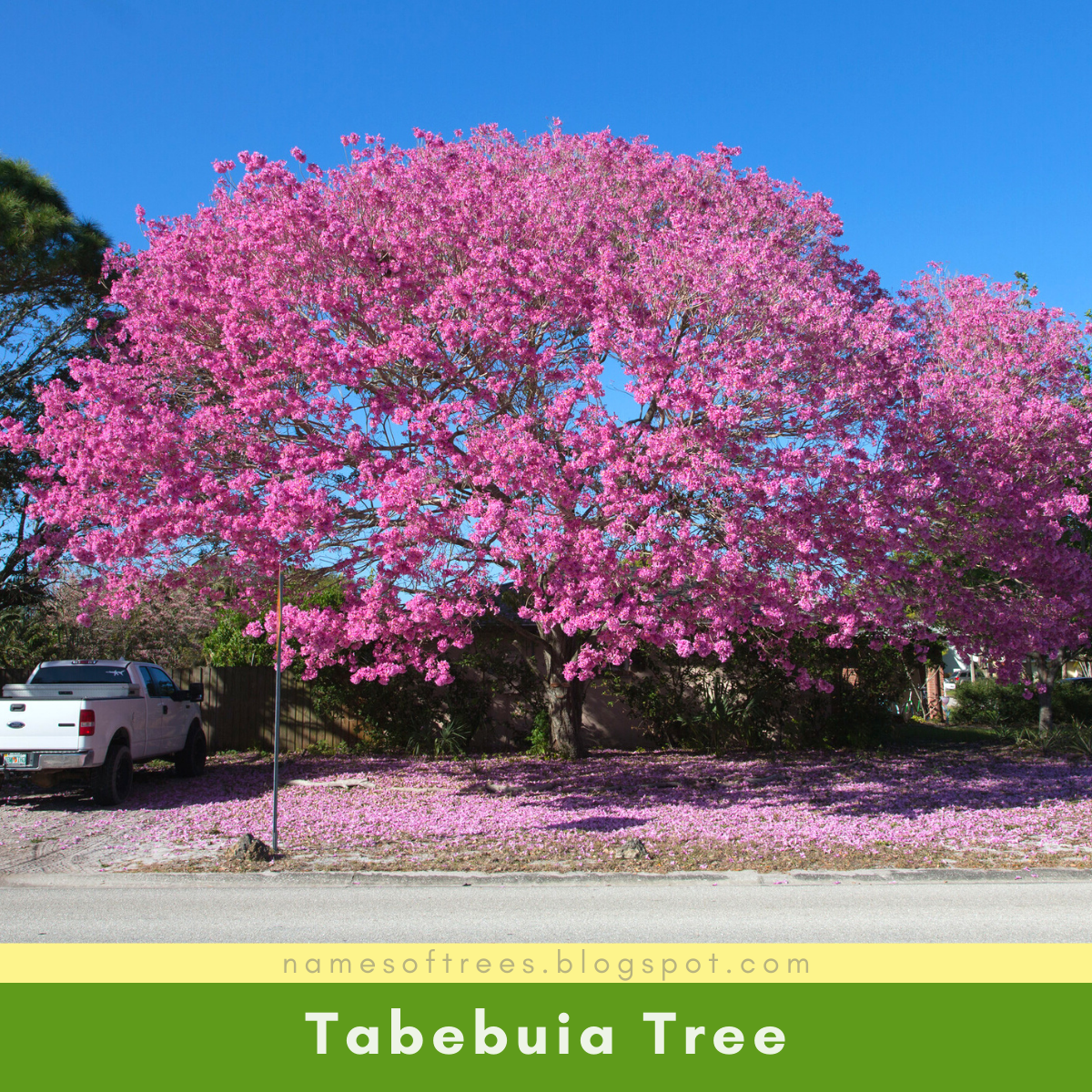 List Of Tropical Flowering Trees As An Alternative Cherry Blossom Names Of Trees