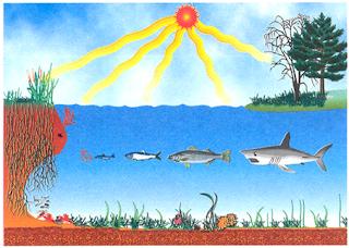 Contoh Interaksi antara komponen biotik dan abiotik