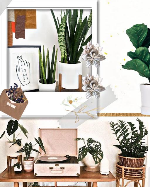 Mejores plantas para mejorar ambiente del hogar