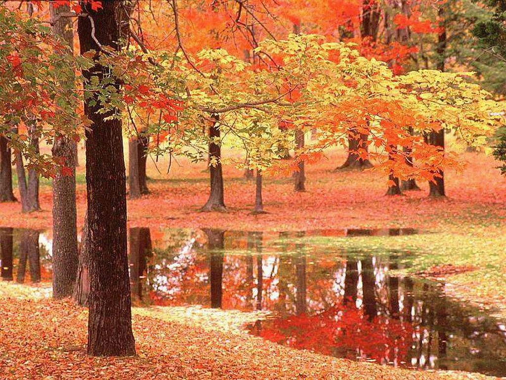 Sfondo pc gratis autunno