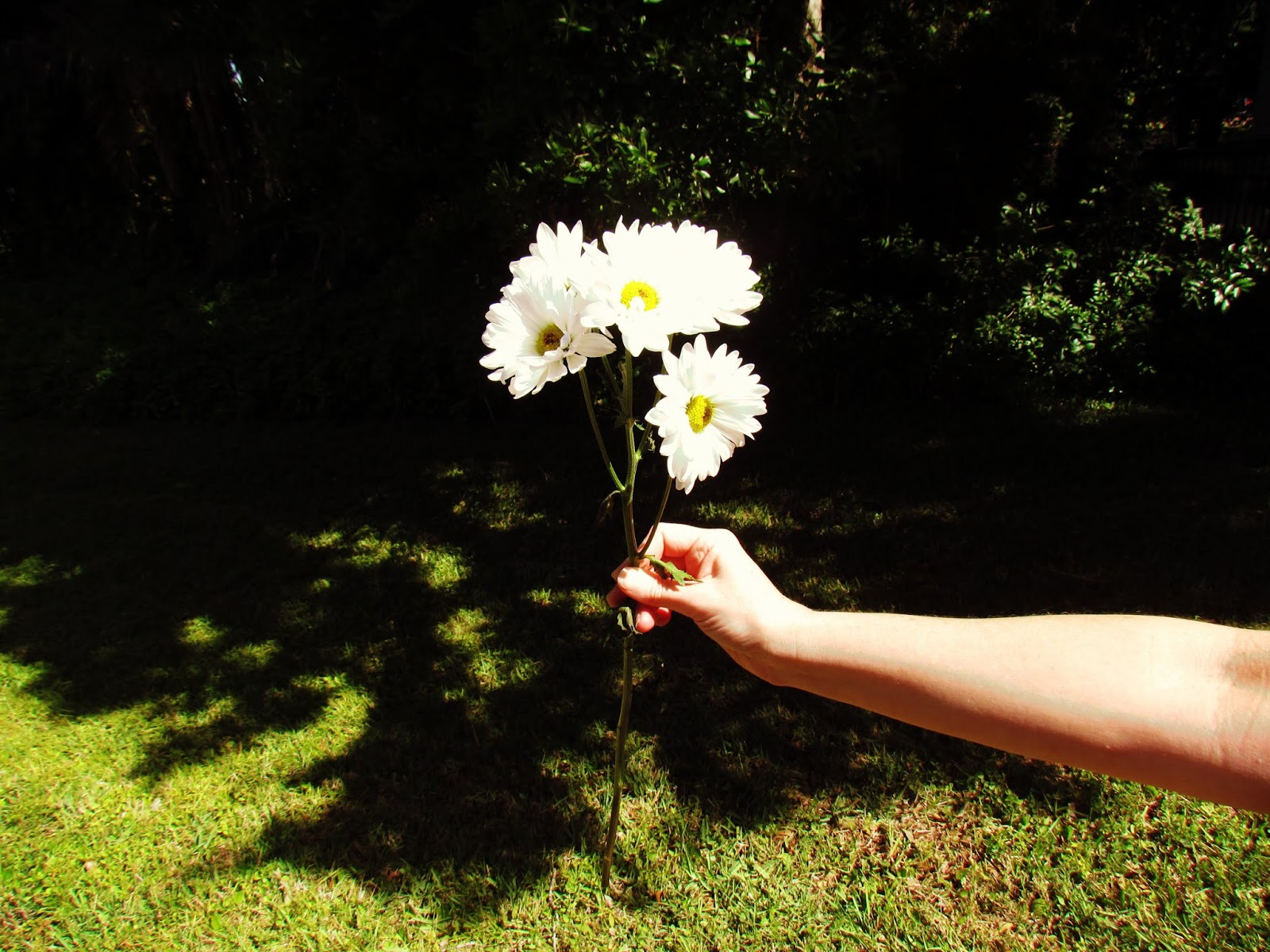 A Woman Holding a Tiny Bouquet of Wildflowers in the Backyard on Green Grass With Tall Oak Trees