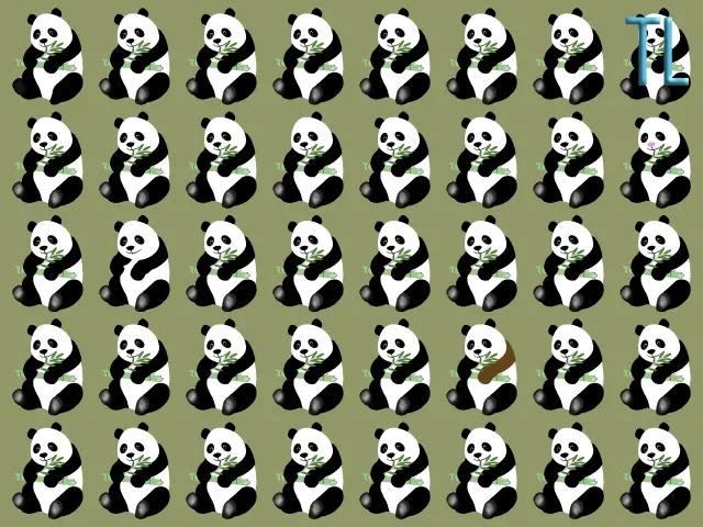 Encuentra los 5 osos panda diferentes