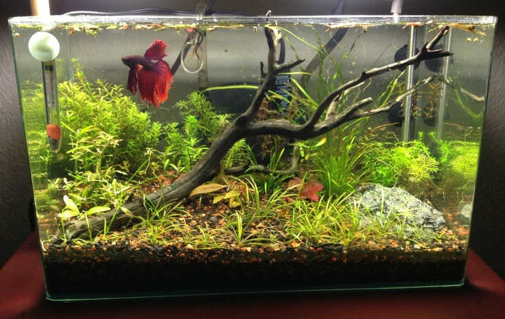 Betta fish tank setup ideas that make a statement for Aquarium decoration ideas freshwater
