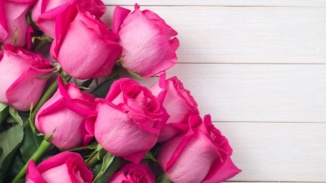 bouquet of pink rose flowers in white background HD flowers