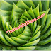How to use aloe vera | Discover the best and most effective ways |   How to use aloe vera?