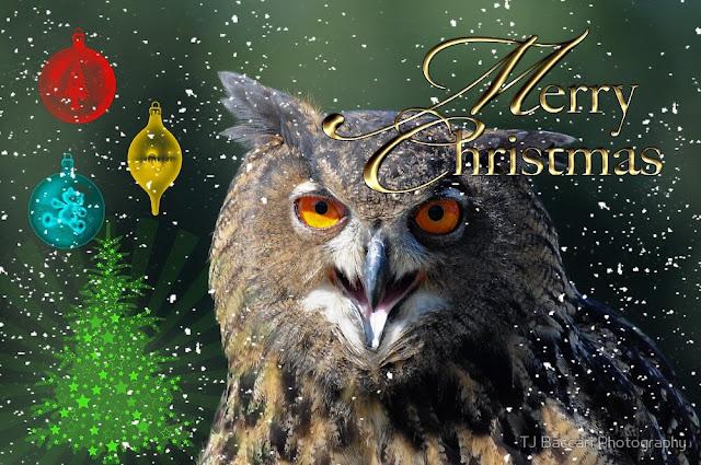 Xmas owl images