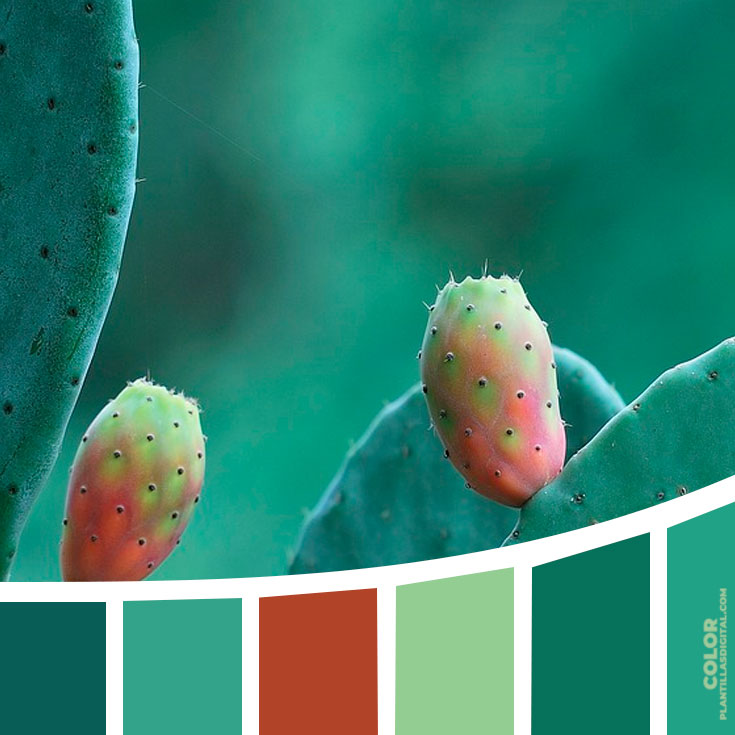 color_293