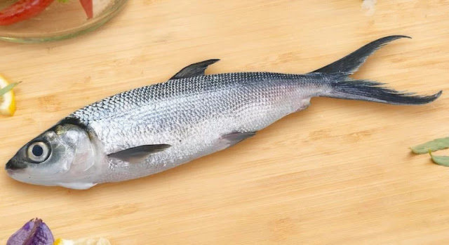 Daftar Harga Jual Ikan Bandeng Yogyakarta Terpercaya