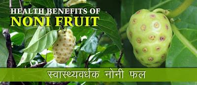 नोनी फल के स्वास्थ्यवर्धक लाभ, Health Benefits of Noni Fruit in Hindi, नोनी फल के लाभ,  Noni Fruit Benefits, नोनी फ्रूट के फायदे, नोनी फल कहां मिलेगा, noni fruit ke fayde, चमत्कारी फल-नोनी फल, NONI FRUIT, नोनी फ्रूट,