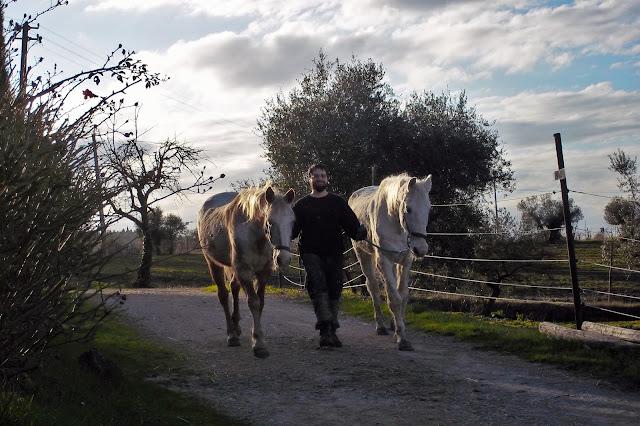 aiutare i cavalli in difficoltà
