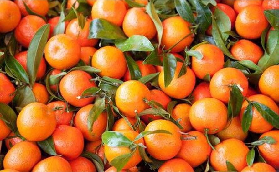 Amefurashi Bibit Benih Seeds Buah Jeruk Mandarin Ponkam Manis Orange Fruit Kota Administrasi Jakarta Selatan
