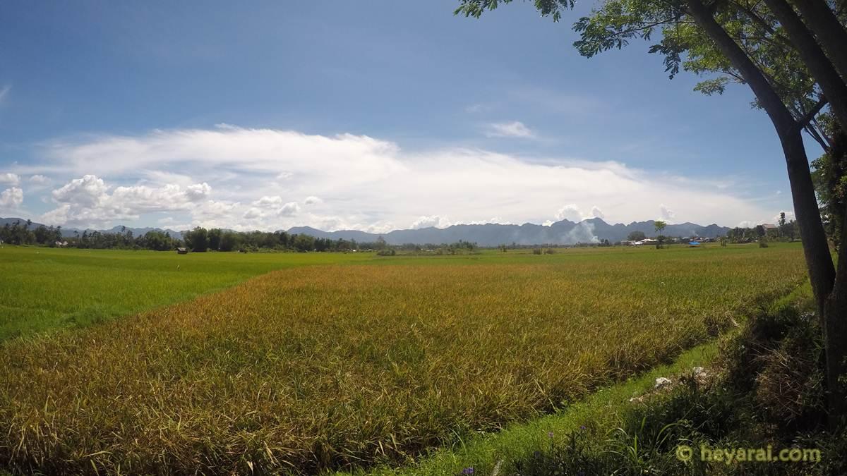 hamparan sawah perjalanan ke Istana Pagaruyung