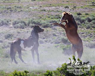 Dog belly markingsdaruma fields saddlery saddle