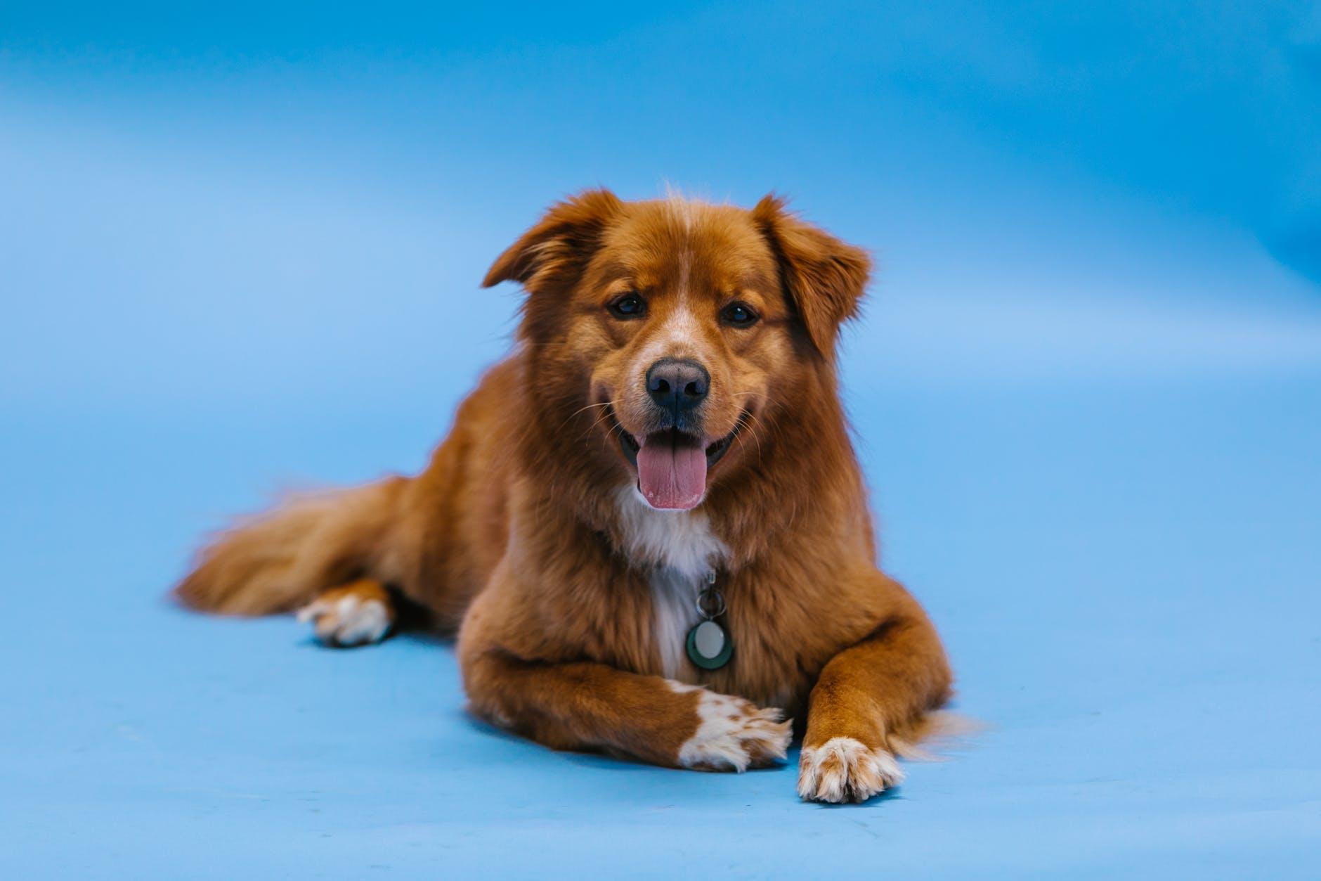 13 faits curieux sur les chiens