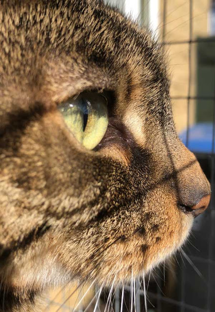 close up cat profile with green eye