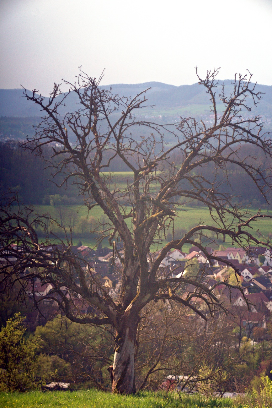 Projekt ABC: I wie inaktiver Baum