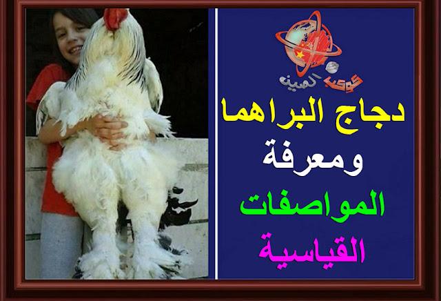"""""""دجاج البراهما""""  """"دجاج البراهما ويكيبيديا""""  """"دجاج البراهما فى مصر""""  """"دجاج البراهما للبيع""""  """"دجاج البراهما العملاق""""  """"دجاج البراهما الاصلي""""  """"دجاج البراهما في العراق""""  """"دجاج البراهما في تونس""""  """"دجاج البراهما سبرايت""""  """"دجاج البراهما الاسود""""  """"دجاج البراهما الابيض""""  """"دجاج البراهما العملاق للبيع""""  """"دجاج تكاً""""  """"دجاج براهما oued kniss""""  """"دجاج البراهما ouedkniss""""  """"دجاج براهما ouedknis""""  """"دجاج البراهما مصر""""  """"دجاج براهما للبيع فى مصر""""  """"دجاج براهما مصر""""  """"اين يباع دجاج البراهما فى مصر""""  """"دجاج براهما للبيع""""  """"دجاج براهما للبيع في تونس""""  """"دجاج براهما للبيع في العراق""""  """"دجاج براهما للبيع في الجزائر""""  """"دجاج براهما للبيع في جده""""  """"دجاج براهما للبيع في ابها""""  """"دجاج براهما للبيع بالرياض""""  """"دجاج براهما للبيع جده""""  """"دجاج براهما للبيع في جدة""""  """"دجاج البراهما العملاق الاصلي""""  """"الدجاج البراهما العملاق""""  """"دجاج براهما عملاق""""  """"دجاج براهما عملاق للبيع""""  """"فراخ البراهما العملاق""""  """"الدجاج البراهما الاصلي""""  """"مواصفات دجاج البراهما الاصلي""""  """"معرفة دجاج البراهما الاصلي""""  """"كيف اعرف دجاج البراهما الاصلي""""  """"اين يوجد دجاج البراهما في مصر""""  """"بيع بيض دجاج براهما في تونس""""  """"دجاج البراهما التونسي""""  """"دجاج براهما للبيع تونس""""  """"دجاج براهما سبرايت""""  """"دجاج براهما سبرايت للبيع""""  """"دجاج براهما سبرايت واد كنيس""""  """"دجاج براهما سبرايت للبيع ليبيا""""  """"دجاجة براهما سبرايت""""  """"سعر دجاج براهما سبرايت""""  """"تربية دجاج براهما سبرايت""""  """"دجاج براهما الاسود""""  """"دجاج براهما أسود""""  """"دجاج براهما اسود""""  """"دجاج براهما اسود للبيع""""  """"دجاج براهما الابيض""""  """"سعر دجاج البراهما""""  """"دجاج بياض بوفانز""""  """"دجاج بوفانز""""  """"دجاج براهما ابيض""""  """"بيع دجاج براهما ابيض""""  """"دجاج تكاًمسالا""""  """"دجاج تكا مسالا""""  """"دجاج تكا الكويت""""  """"دجاج تكا رقم""""  """"دجاج تكا امريكانا""""  """"دجاج تكا منيو""""  """"دجاج تكا تندوري""""  """"دجاج تكا الطازج""""  """"دجاج تكا ا""""  """"دجاج بيك""""  """"دجاج.كوم""""  """"دجاج كوم""""  """"elmenus دجاج تكا""""  """"دجاج جميزة""""  """"دجاج تكا hotline""""  """"رقم دجاج تكا hotline""""  """"الدجاج اللجهورن""""  """"دجاج ايمانسيه""""  """"دجاج الهبرد""""  """"دجاج تكا menu""""  """"دجاج تكا al maadi""""  """"otlob دجاج تكا""""  """"دجاج تكا 6 اكتوبر""""  """"دجاج تكا""""  """"دجاج تكا website""""  """"ouedkniss دجاج براهما""""  """"دجاج بلدي مهجن""""  """"دجاج حبشي للب"""