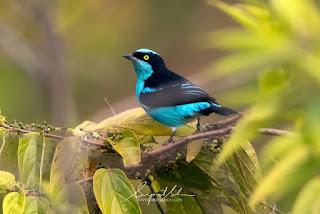 اجمل انواع الطيور في العالم