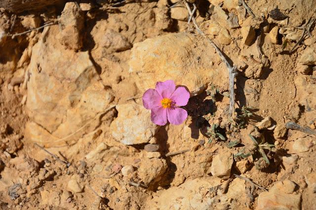 Fleurs dans la réserve naturelle de Dana