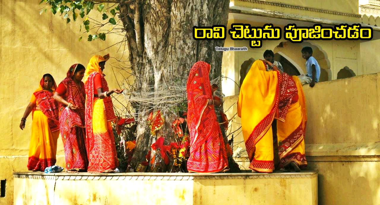 రావి చెట్టును పూజించడం - Raavi Chettu