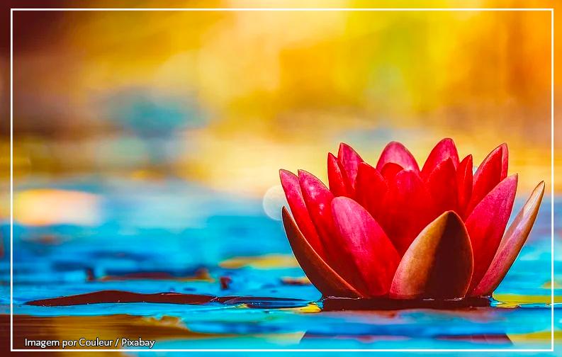 A imagem mostra uma flor de lótus vermelha, posicionada a direita da imagem, boiando em um lago de cor azul