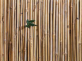proses-pengeringan-bambu.jpg