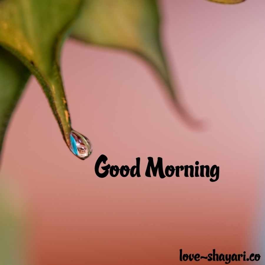 good morning nature pics