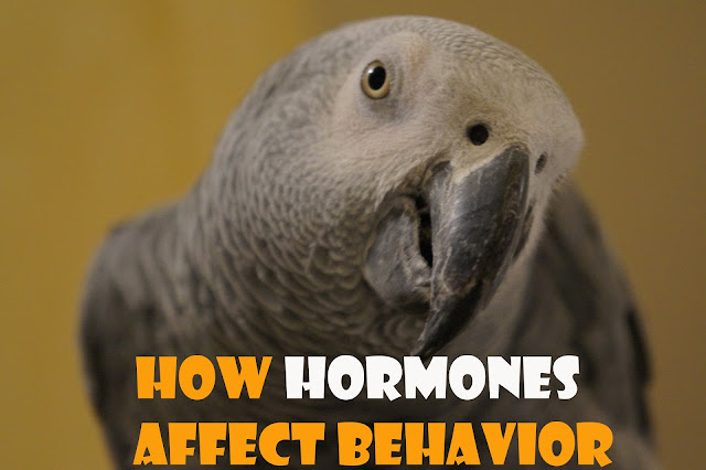 parrots hormons behaviors