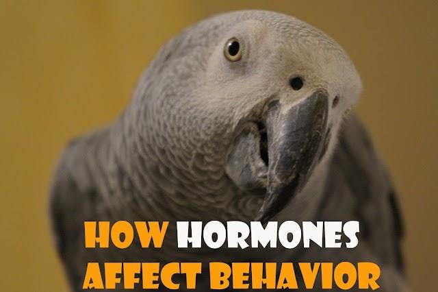 is Bird's Hormones  have an effect on Behavior
