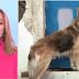 Υιοθετήθηκε ο σκύλος της Αγγελικής που δολοφονήθηκε στην Κέρκυρα (video+photos)