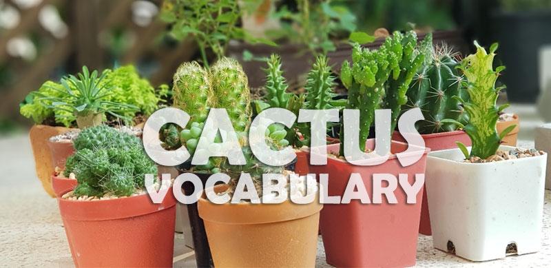 Cactus Succulent Vacabulary