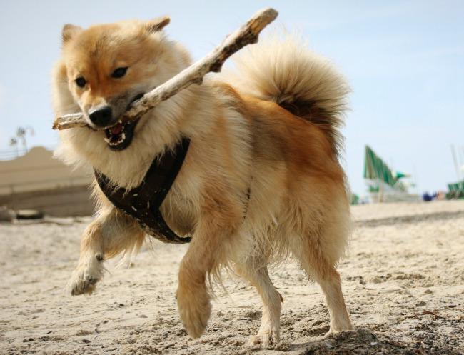 Jak dobrać szelki dla psa?