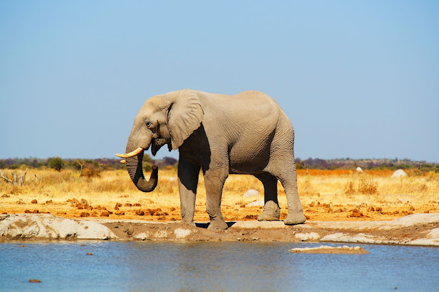 kenya-elefante
