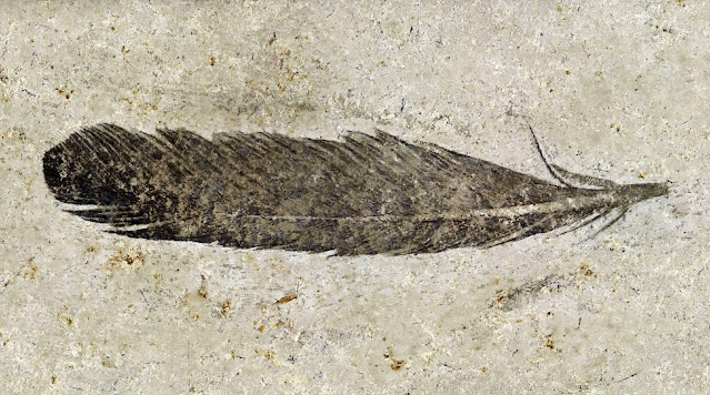 Dinosaur feather study debunked
