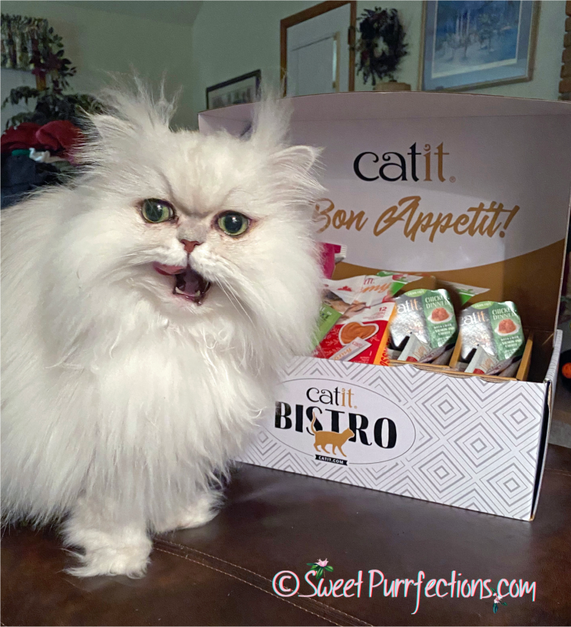 Silver shaded Persian cat, licking tongue, in front of Catit Bistro Box