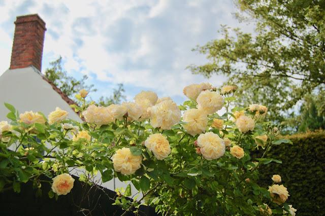 Romantische rozentuin