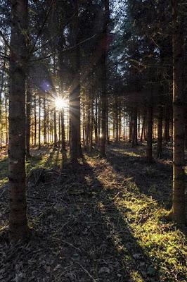 Die Sonne scheint durch einen dichten Nadelwald hindurch mtb