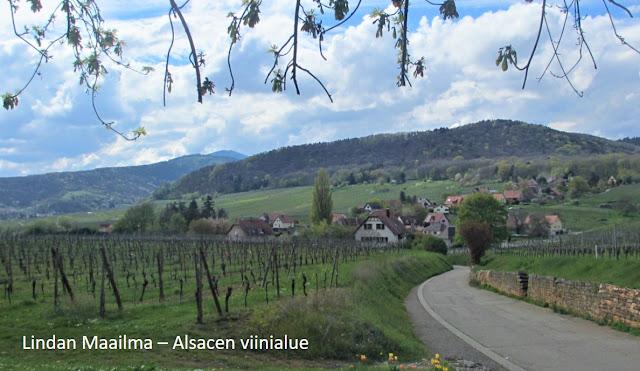 Viinitarha Alsacen viinireitillä Mittelbergheim Ranska