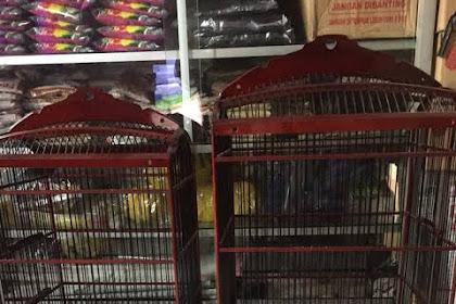 Cara Membersihkan Kandang Burung yang Baik dan Benar