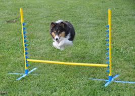 cães salto na grama