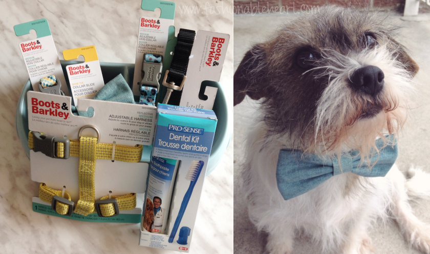 target canada clearance haul dogs boots and barkley collar bow tie leash